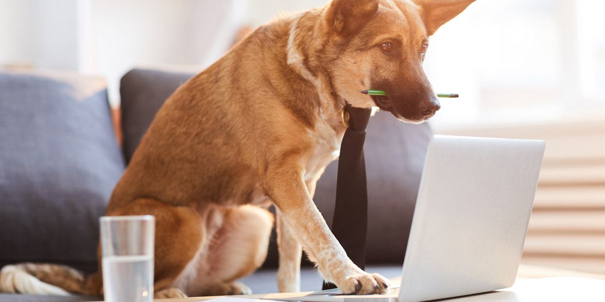 Dog Blogging